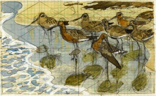 Black-tailed Godwits by the sea -