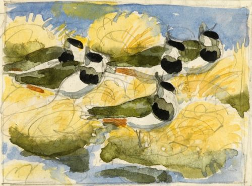 Five Lapwings -